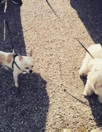 Passeggiata per il tuo cane