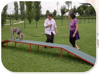 Corso Mobility Dog Dog Feeling